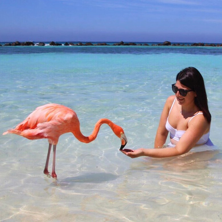 Honeymoon Ditemani Flamingo Pantai di Aruba Resort 10