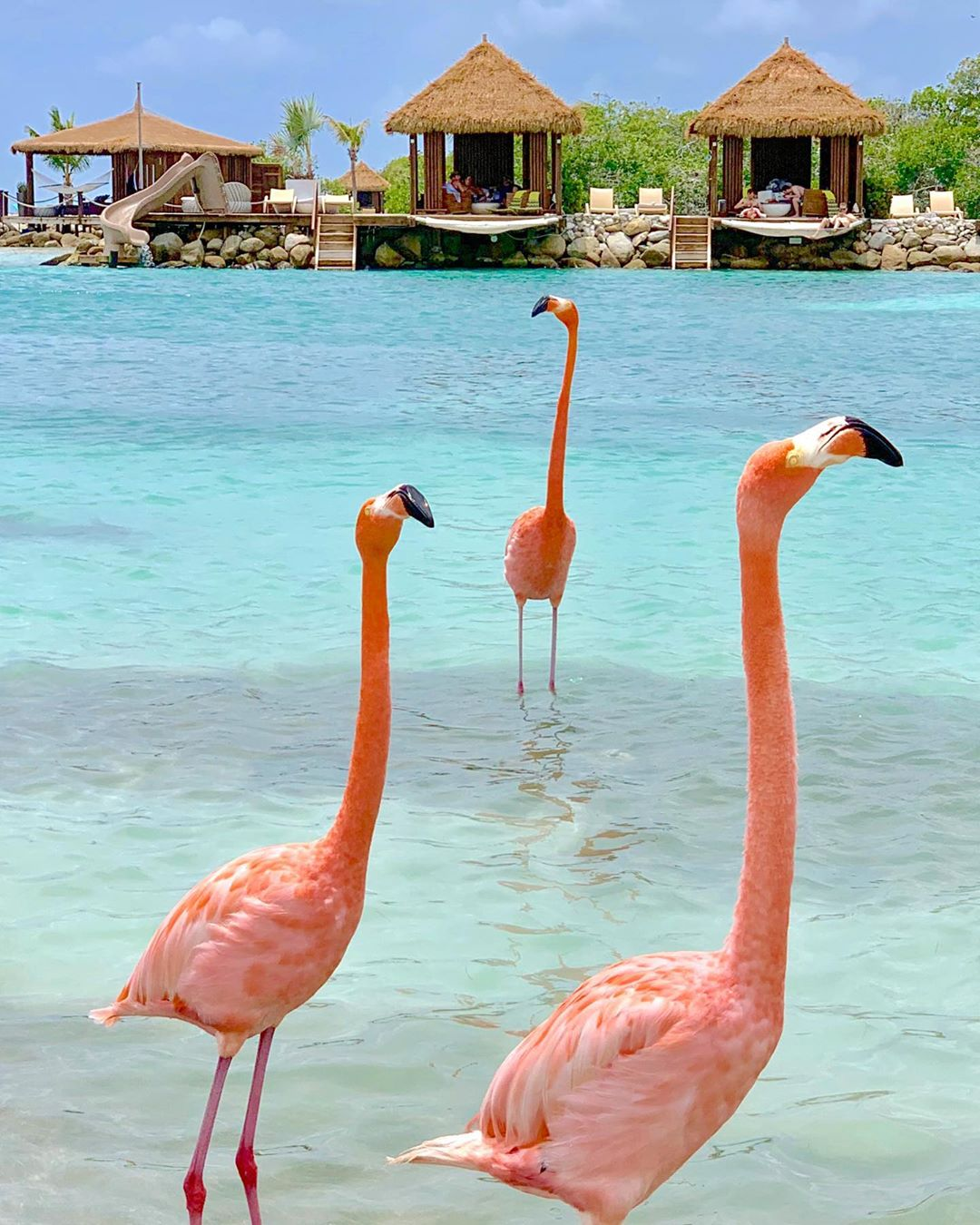 Honeymoon Ditemani Flamingo Pantai di Renaissance Private Island