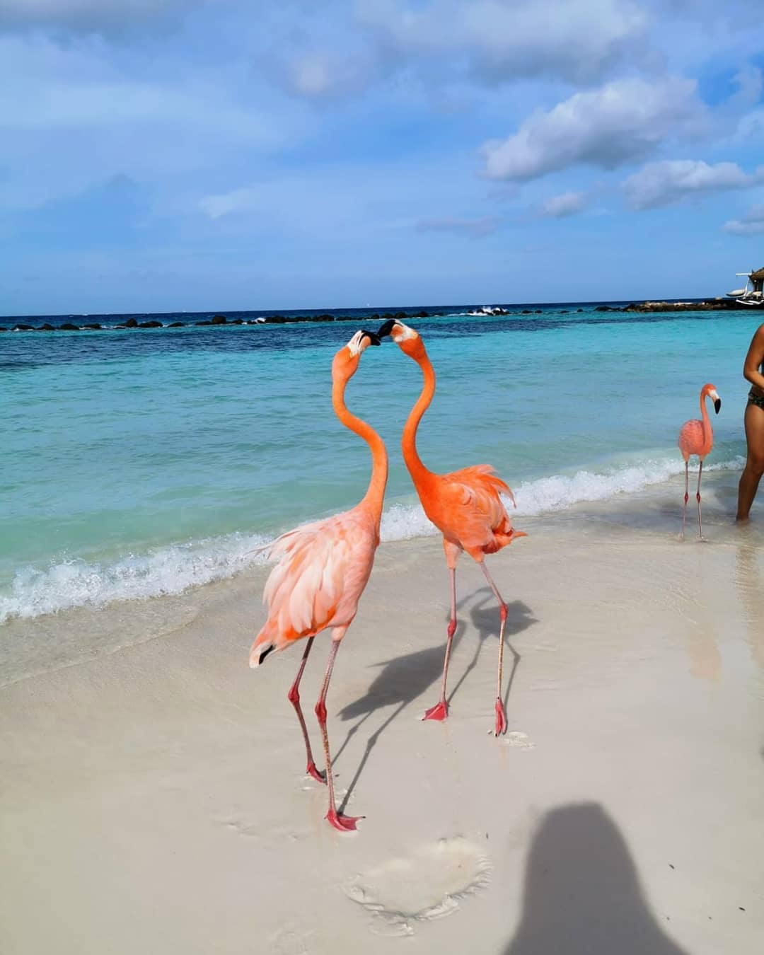 Honeymoon Ditemani Flamingo Pantai di Renaissance Private Island 6